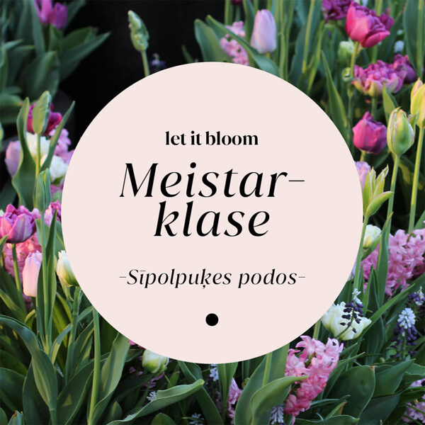 Meistarklase 'Sīpolpuķes podos' 6 Nov 2021, plkst 9.30